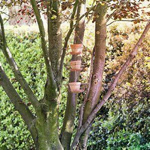 giardino-vasi_albero_1w1